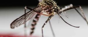 Virus Zika, l'Oms alza la soglia d'allarme: «Emergenza internazionale»