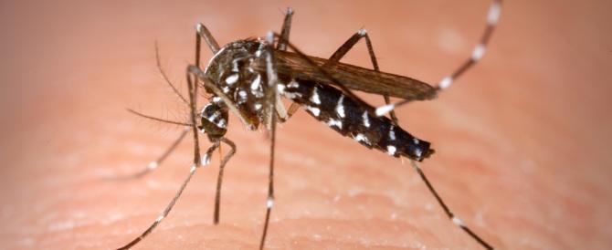 Zika, tutto quel che c'è da sapere sulla malattia virale trasmessa dalle zanzare