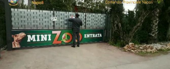 Scoperto uno zoo abusivo con dromedari, lama e pesci tropicali (video)