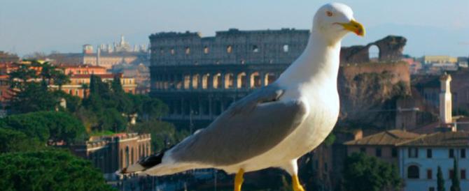 Non solo topi, Roma invasa anche dai gabbiani diventa Caput immondizia