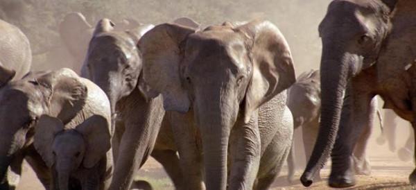 Elefanti infuriati escono dalla foresta e fanno strage nei villaggi del Bengala