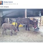 """""""Ministri all'opera"""". Nella foto, due asini. (Foto Instagram)"""