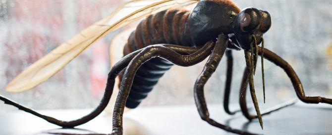 """Virus Zika, un caso nelle Marche. Gli esperti: """"Può esplodere in estate"""""""