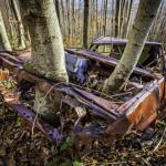 Lo scatto primo classificato: L'albero motore. Di  Francesco Castelli