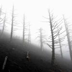Nebbia sull'Etna. Di Filippo Alfero