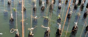 Scandalo petrolio: sostituirono addirittura le cozze usate per l'ambiente