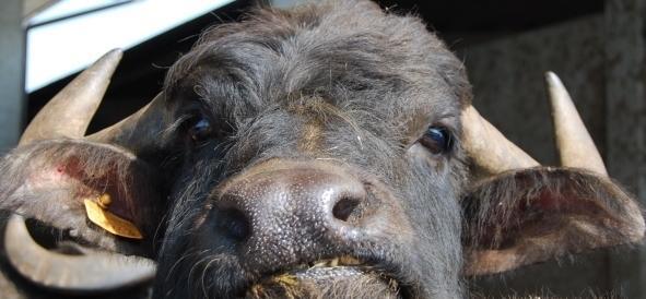 Primo Aprile, le bufale invadono il web: ecco le più esilaranti
