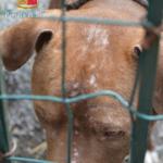 Quaranta gli animali ritrovati grazie ad una inchiesta congiunta. Foto Polizia di Stato, Facebook)