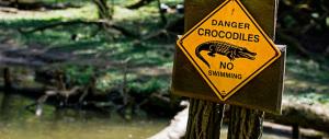 Vacanze da incubo, campeggiatore assalito in tenda da un coccodrillo