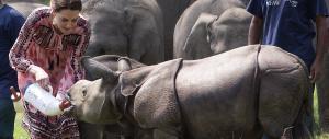 India, William e Kate nel parco che tutela i rinoceronti bianchi con le armi