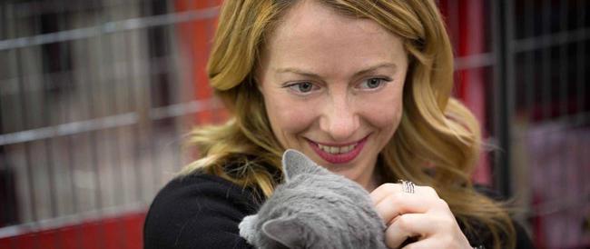 """Meloni lancia l'appello per l'adozione dei gatti: """"Portiamoli in famiglia"""""""