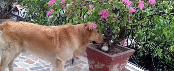 Il cane di Girone, Argo, resta in India. Arriverà solo la prossima settimana