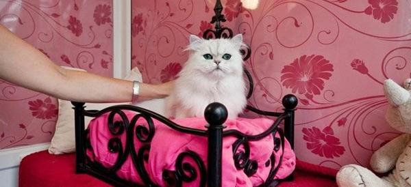 """Il Papa bacchetta gli animalisti: """"Tenete più al gatto che al vicino"""""""