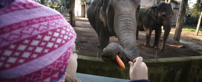 "L'ultima volta degli elefanti al circo ""Ringling Bros"": vivranno in Florida"
