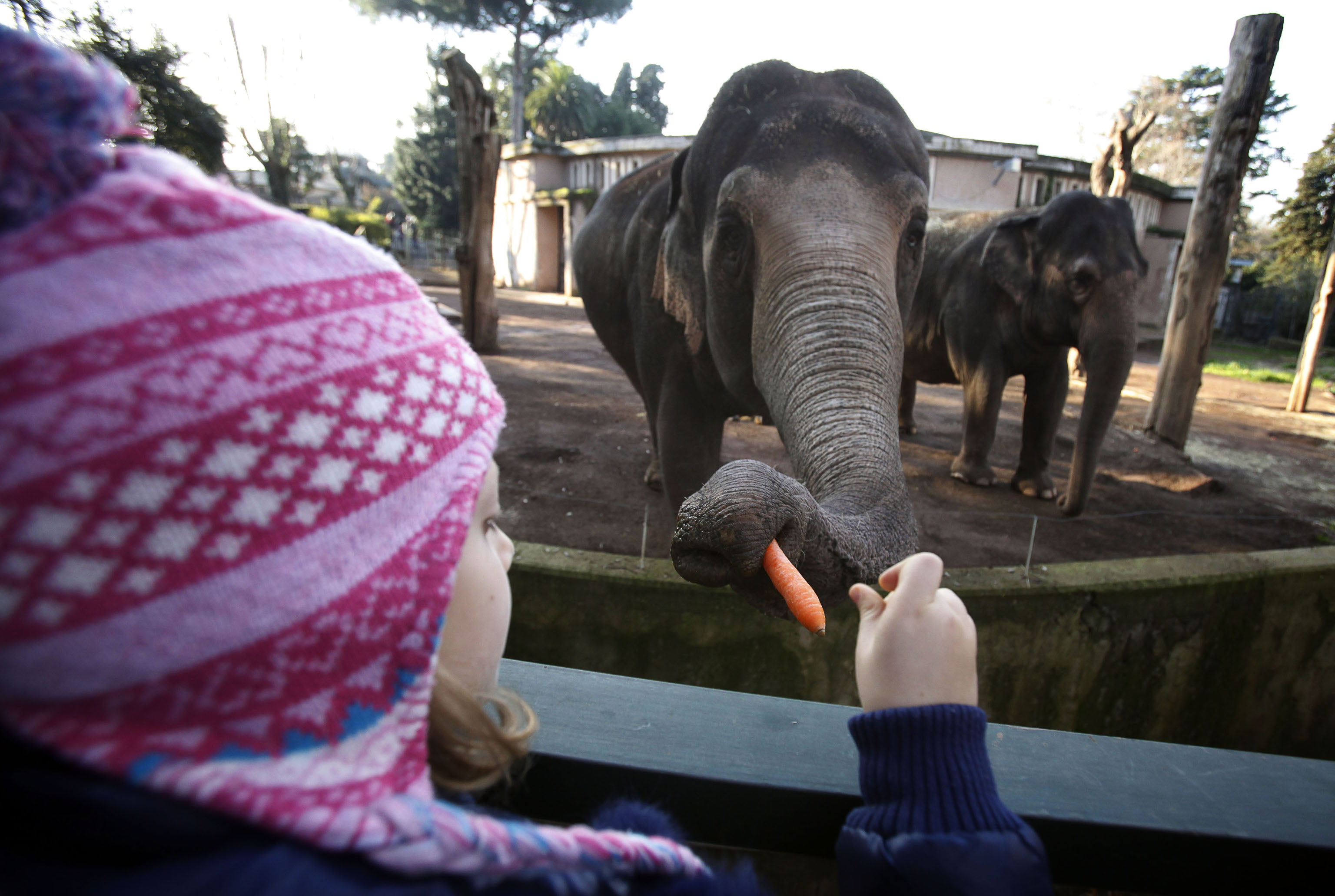 Apple compra i diritti su un documentario di elefanti e un il film