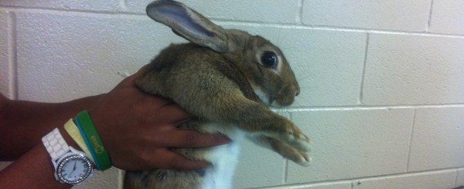 Vivisezionò 2 conigli: confermato in Cassazione licenziamento di un prof