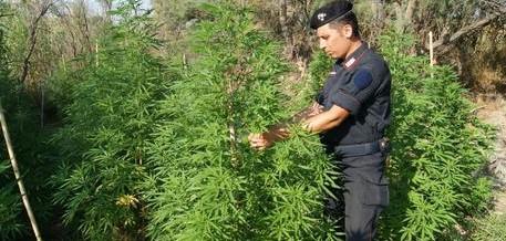 Carabiniere ucciso, arrestato il proprietario dei campi di marijuana