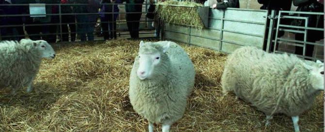 La pecora Dolly 20 anni dopo: la clonazione umana (per fortuna) è lontana