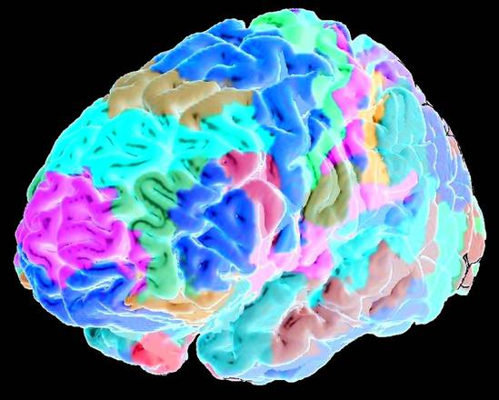 Dalla ricerca italiana una terapia rivoluzionaria per i traumi al cervello