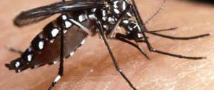 La zanzara-tigre infesta 63 province: ecco i rimedi per tenerla lontana