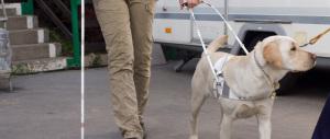 Hotel di Rimini respinge una cliente cieca con cane guida: è polemica