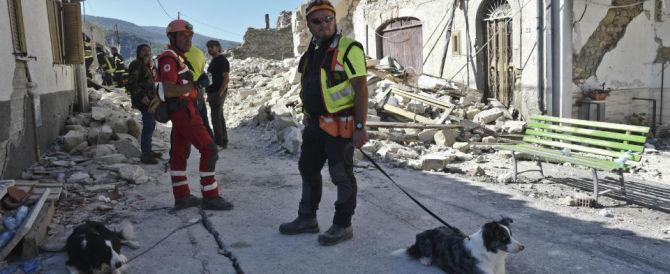 I cani da macerie in prima linea: hanno salvato 60 persone e trovato 50 corpi