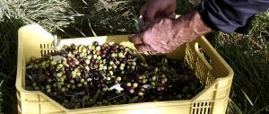 """Contro il diabete vince la """"dieta del contadino"""": sì a olio, pesce e fibre"""