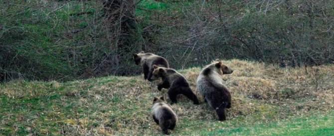 Salviamo l'orso marsicano. Per l'Abruzzo una risorsa, non un nemico