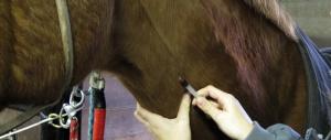 Droghe killer, dagli Usa il sedativo per cavalli: è 100 volte più forte dell'eroina