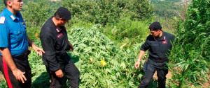 Foggia, immigrati gestivano piantagione di marijuana. Tre arresti