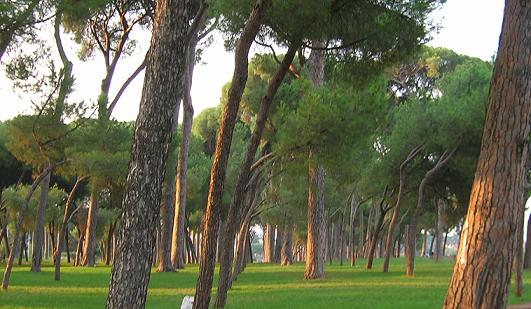 Roma, ferito a bottigliate da un senegalese che urinava nella pineta