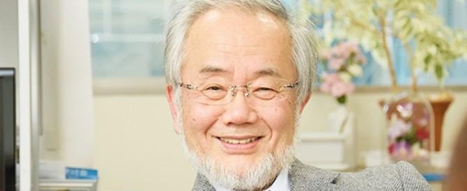 Nobel per la medicina a Ohsumi: scoprì l'autofagia delle cellule