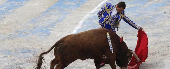 La furia animalista contro un bimbo malato di cancro: ti piace la corrida, muori