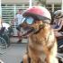 La vista di cani e gatti? Si protegge con lenti a contatto e occhiali