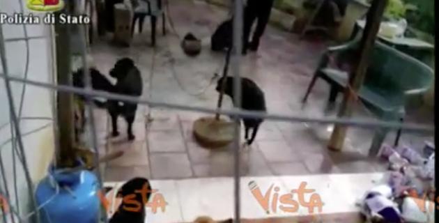 Lecce, liberati i cagnolini maltrattati e seviziati. Denunciato il padrone (video)