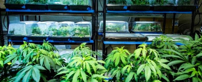 """Una serra coltivata a marijuana nel centro di Roma con il kit """"fai da te"""" per le canne"""