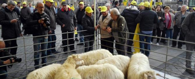 Coldiretti contro il governo: a Roma migliaia di pecore e pastori (VIDEO)