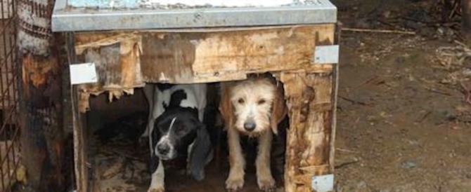 Lasciò morire il suo cane Zeus, condannato per uccisione volontaria