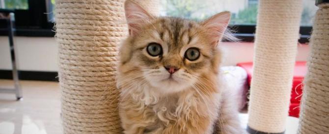 Lucca, uccide i tre gatti della ex convivente: uomo rinviato a giudizio