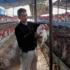 Aviaria, nuovo allarme in Francia: situazione in pericolosa evoluzione