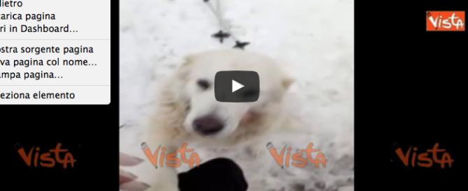 Abruzzo, commovente salvataggio di animali sepolti dalla neve (VIDEO)