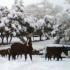 Sardegna, dopo il muro di neve, ora per gli animali è emergenza pioggia