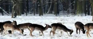 Coldiretti, freddo killer e mancanza d'acqua uccidono 270 animali