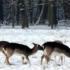 Sos Coldiretti, 3000 stalle e aziende sepolte dalla neve: economia a rischio