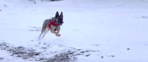 """Dalle spiagge alle valanghe di neve: chi sono i cani """"eroi"""" di Rigopiano (video)"""