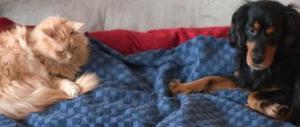 Quando l'amore per cani e gatti diventa anche un business assicurativo