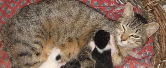 Animali domestici in 4 case su 10: per un giro d'affari di diversi miliardi