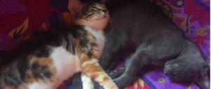 Proprietari di gatti a rischio sanzioni: è in arrivo la legge per l'anagrafe felina