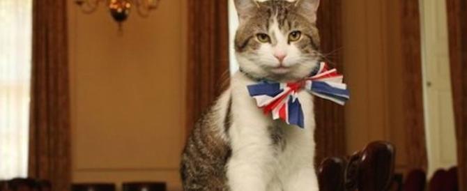 """La Brexit """"felina"""": il gatto di Downing Street indossa il collarino inglese"""