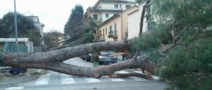 Maltempo, Cagliari stravolta dal vento: mareggiate e alberi abbattuti in strada